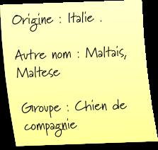 Tag # 1 Race de Chien / Bichon Maltait