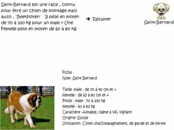 Tag # 3 Race De Chien / Saint-Bernard .