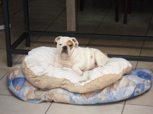 Voila Krispy,presque 3 mois et 8 kg 800 !!