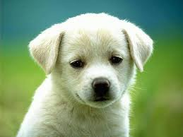 how much like and share will give my friends for this cute doggy. http://bit.ly/16JYjvh