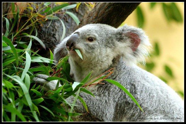 Préférence Blog de SOS-Animal-Protection - Pour la cause animale ! - Skyrock.com KF84