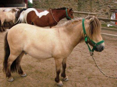 L'équitation, Le Seul Sport Qui Se Pratique A Deux