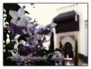 Photo de LETTRES-A-NOS-SOEURS