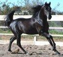 Photo de chevaux626000