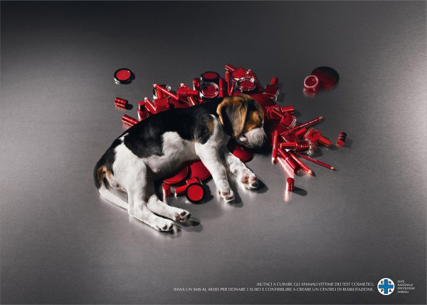 Vivisection, expérimentation animale : pour ou contre ?