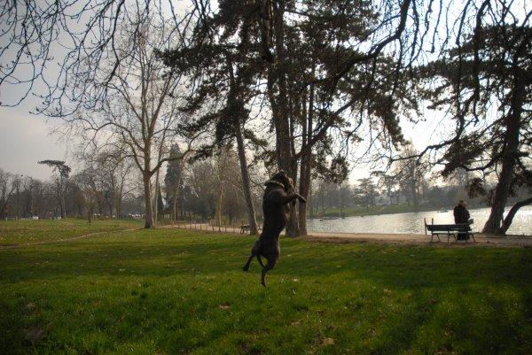 jump !!