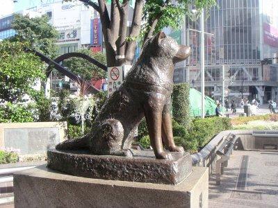 Le célèbre chien Hachico