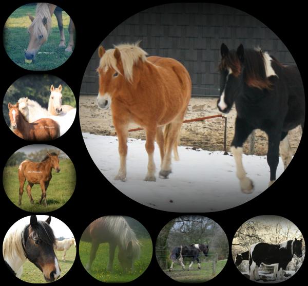 ❉ Quelques-uns de mes anciens poneys ❉