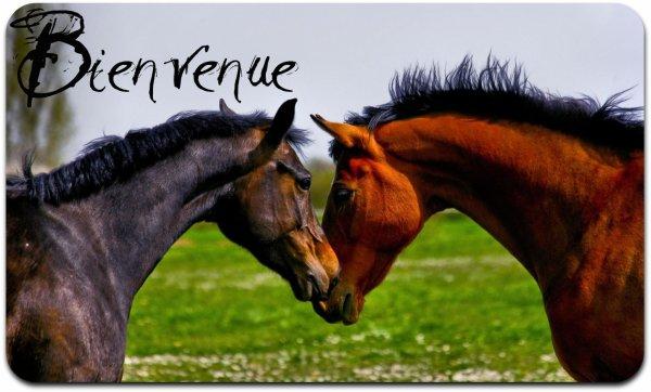 Blog de Chevaux-Info - ♥ Le cheval plus que tous ♥ - Skyrock.com