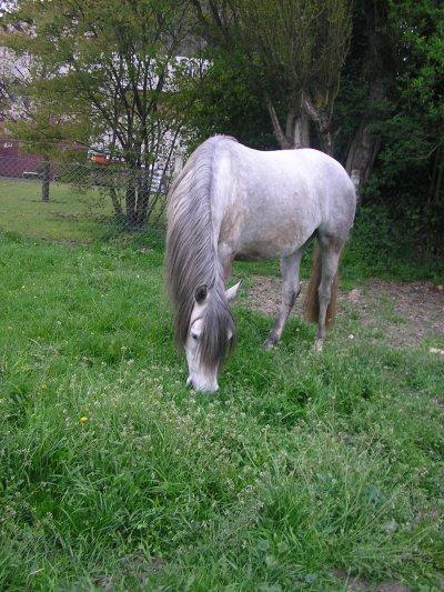 Aimer un cheval ce n'est pas seulement monter dessus c'est aussi passer des heures à le regarder...