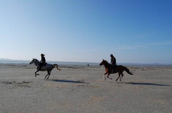 """""""Si le cheval connaissait sa force, serait-il assez fou pour accepter le joug, comme il le fait ? Mais qu'il devienne sensé et s'échappe, alors on dira qu'il est fou..."""""""