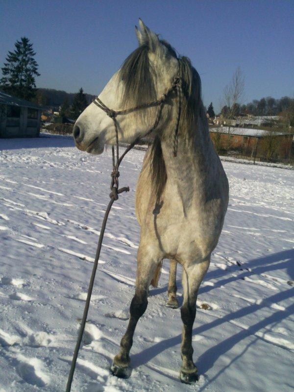 Première séance dans la neige !