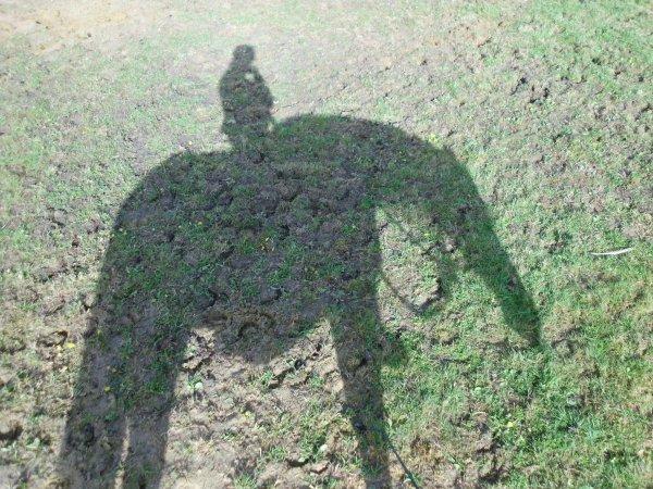 « La connaissance du naturel d'un cheval est un des premiers fondements de l'art de le monter, et tout homme de cheval en doit faire sa principale étude. »