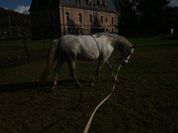 """""""Votre cheval vous ressemble comme votre reflet dans un miroir. ♥"""""""