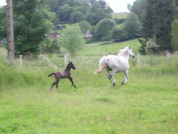 """""""Ce n'est pas un cheval et vous n'êtes pas dans un manège, c'est un partenaire de danse et vous êtes sur la piste. """""""