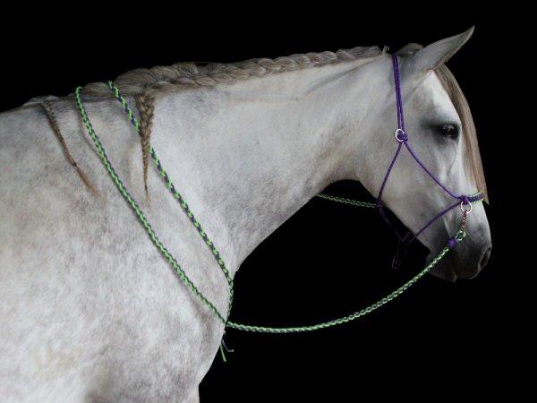 """""""L'amour d'un cheval est si précieux qu'il vaut de l'or."""" ♥"""