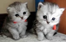 ils sont pas trop mignon tous ces petit chatons