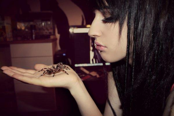 Spider kiss Vivi Bunnycore
