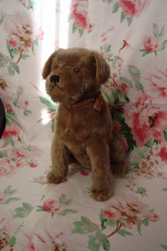 Déniché lors d'une fête de famille, abandonné dans un coin désolant, ce petit chien Steiff de la première époque, avec son bouton à l'oreille...!