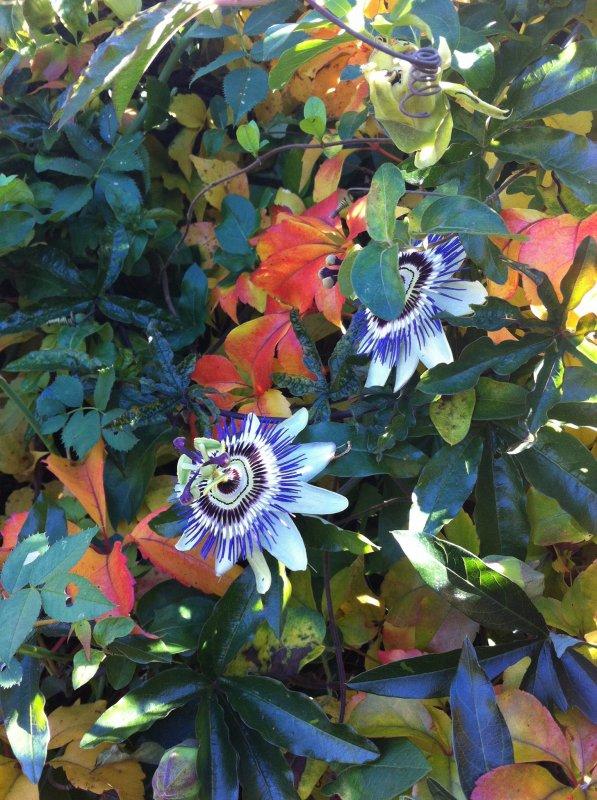 L'automne dans notre petit jardin ..!