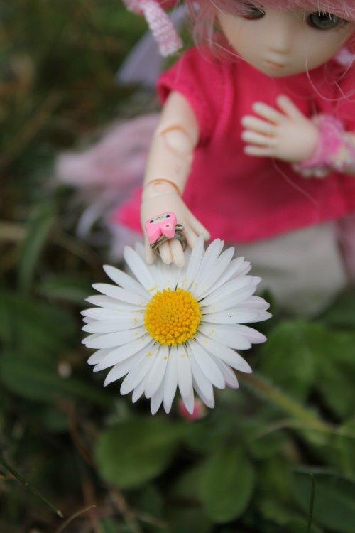 Les fleurs du jardin avec Patisserie