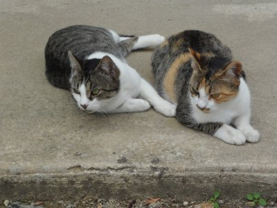 mes deux chat