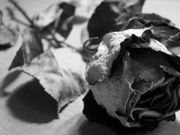 Articles De Xbellephrasesx Tagges Fleur Fane Belle Phrase Et