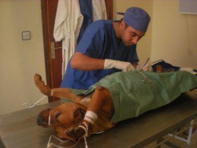 remerçiements le veterinaire mohamed masoudie sur dar bouaza