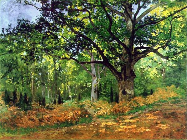 """Le """"Chêne Bodmer"""" de Claude Monet et une dédicace toute particulière pour Jérémy, l'ami des arbres."""