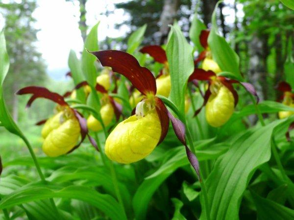 Mai - Juin : Où quand la France se couvre d'orchidées !