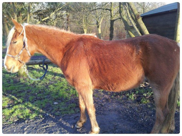 Depuis que l'hiver a pointer le bout de son nez, poney c'est amoché :/