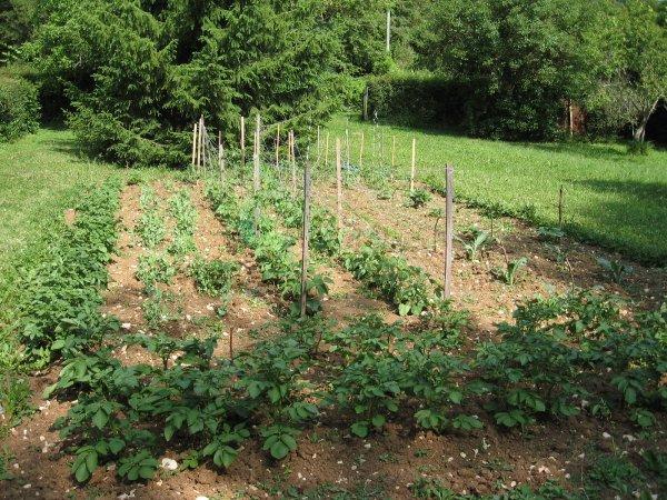 Mon jardin, là où le faisait mon grand-père quand j'étais petite fille. Il y a longtemps, c'était dans les années 50 ...