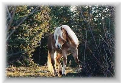 passion des chevaux