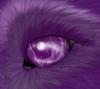 Taniere-des-loups