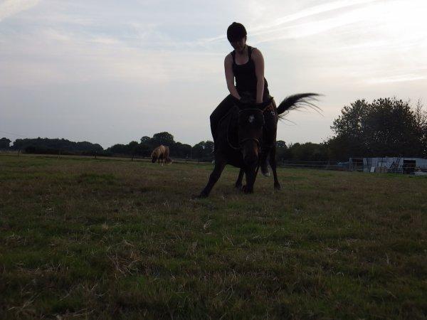My life is brilliant, my pony it's my all.