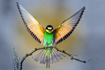L'oiseauen cage rêverades nuages. Qu'y a-t-il de plus beauqu'un oiseau librevolantvers le soleil?