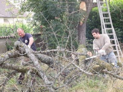 Grosse surprise avant l'abattage de l'arbre le 14 aout 2010