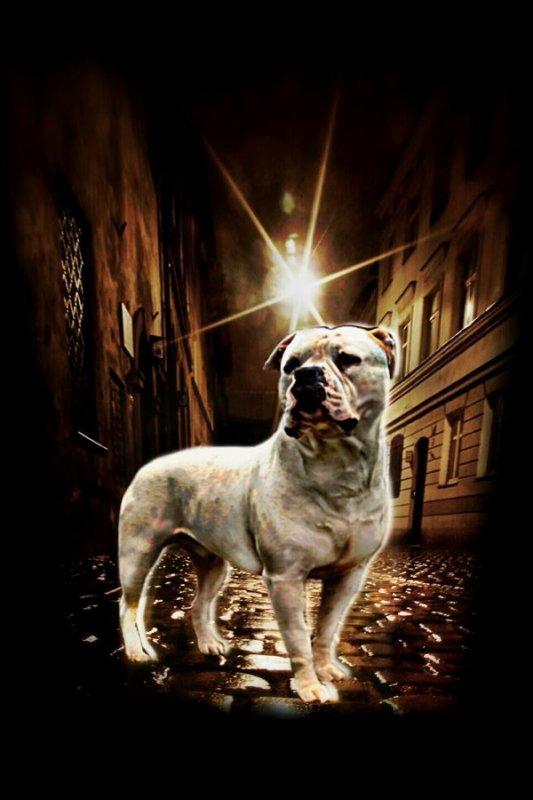 Ghost street of Dogz !!!!