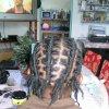 entretien locks+coiffure