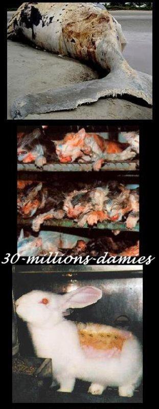 L'horreur des tests scientifiques sur les animaux !!