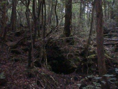 Aokigahara, la forêt de la mort