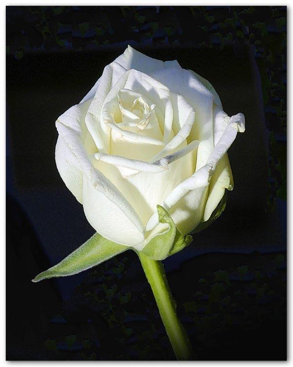 Hommage a mon papa de coeur Pitchou <3