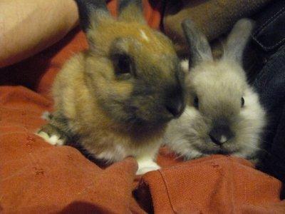 Zézette et Panpan....