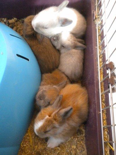 voici les 5 petits