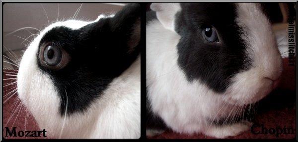 """Article n°Ձ:  """" Si une patte de lapin porte bonheur, qu'a-t-il bien pu arriver au lapin ? """""""
