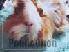 PouiicChon