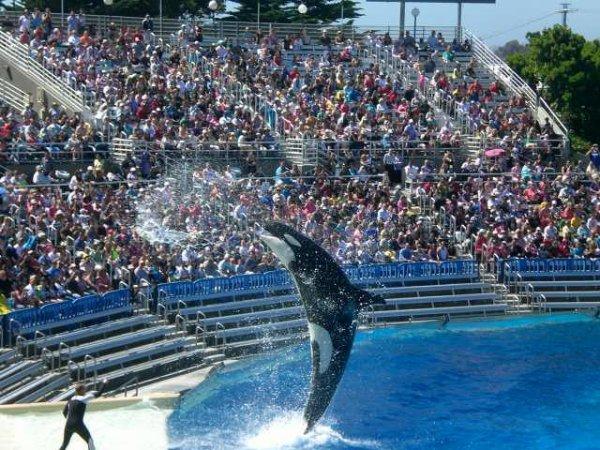 le spectacle d' orques! :) ^^ <3