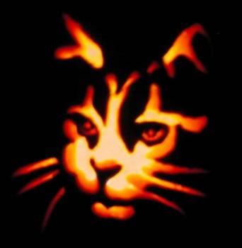 Hé bien voilà , bienvenue dans le monde des chats ;-)