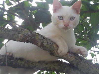 mon chat oby-wan