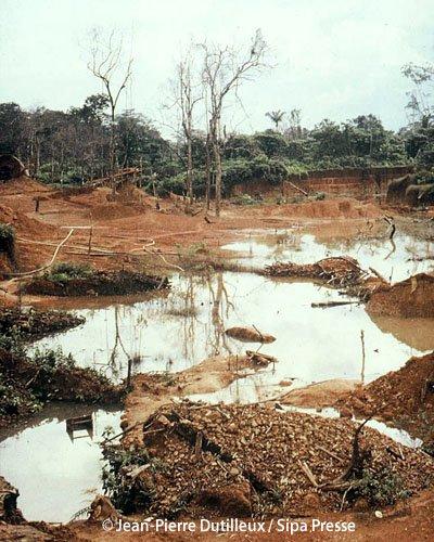 le massacre d un ecosysteme  .....